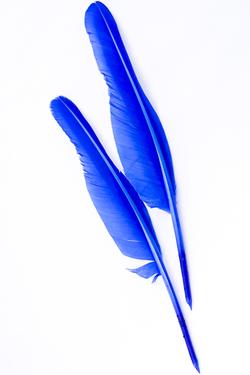 plume bleu plumes plumes. Black Bedroom Furniture Sets. Home Design Ideas