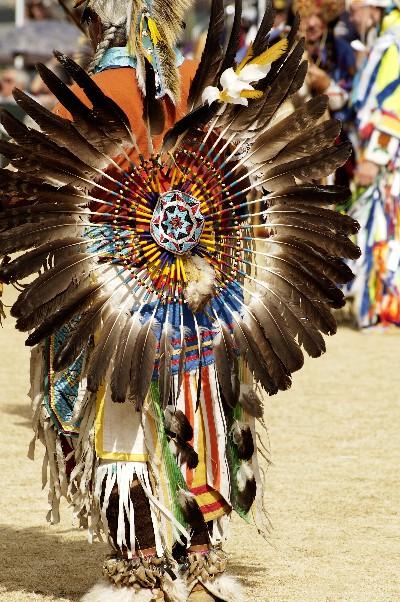 Les plumes d 39 oiseaux prot g s - Signification des plumes d oiseaux ...